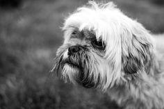Photograph Papi the dog! by Ana-Cristina Dinu on Dogs, Photography, Animals, Photograph, Animales, Animaux, Fotografie, Photo Shoot, Animal Memes