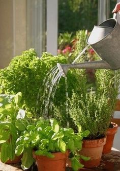 Garden Design Vegetable Pots Ideas For 2019 Garden Tools, Herbs, Plants, Garden Types, Little Garden, Backyard Food, Container Gardening, Drought Tolerant Plants, Garden Plants