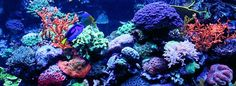 Indo-Pacific Coral Reefs: Types, Characteristics, Biodiversity