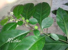 * FRUTINHOS (little fruits) - Viagens com flores, ervas e frutos