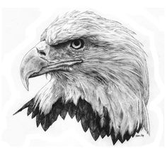 """Bald Eagle. 14"""" X 11"""" Pen & Ink on Bristol board by Eric Ray. www.facebook.com/Eric Ray Creative"""