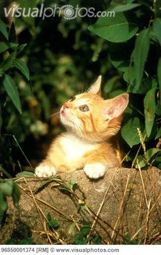 Cute kitten in the bushes and looking up to the world.