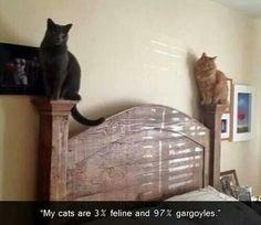 Gargoyle kittehs.