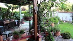 Landhausgarten 2014, bevor der Buchsbaumzünsler  zuschlug...Teil 1