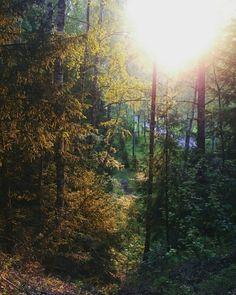 Лес, согретый летним солнцем