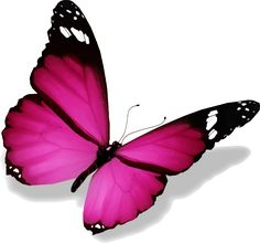 image de papillon - Image De Papillon