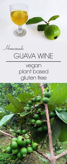 A sweet and tingling, amazingly fragrant, delicious, simple and easy-to-make homemade guava wine. Gluten Free Kitchen, Vegan Gluten Free, Guava Wine, Guava Recipes, Vegan Recipes, Homemade Wine Recipes, Guava Fruit, Fermentation Recipes, Wine Sale