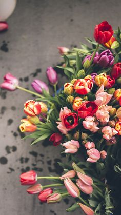 different, tulips, a lot, flowers wallpaper and desktop background 89324 Beautiful Flowers Wallpapers, Pretty Backgrounds, Pretty Wallpapers, Flower Backgrounds, Happy Flowers, Pretty Flowers, Wallpaper Spring, Flower Phone Wallpaper, Flower Aesthetic