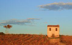 Mazet amongst the vines #Languedoc