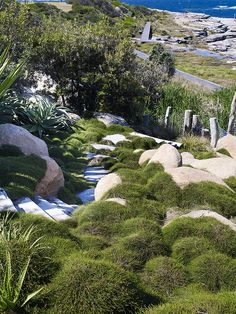 Effective hummocky shapes linking to the shore created by the wave worn boulders and mass planted ground cover. Contrast from the strong vertical accents lent by the driftwood posts and spiky architectural plants.