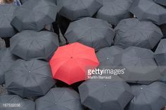 Stock Photo : One red umbrella at center of multiple black umbrellas