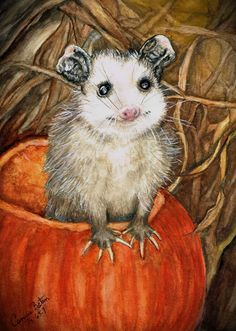 """""""Possum in Pumpkin"""" Watercolor"""