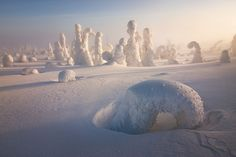 Incredible Photos of Snow-Covered Trees Near Arctic Circle Resemble Alien Planet - Democratic Underground Polo Norte, Photoshop, Ghost Images, Snow Covered Trees, Snow Trees, Winter Trees, Lapland Finland, Alien Planet, Alien Worlds