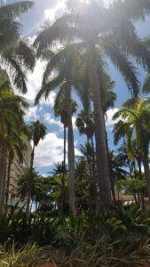 Ten Hours in Hawaii – A Solo Adventure! – IgniteStriveGlow