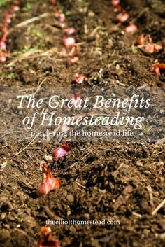The Great Benefits of Homesteading www.theelliotthomestead.com