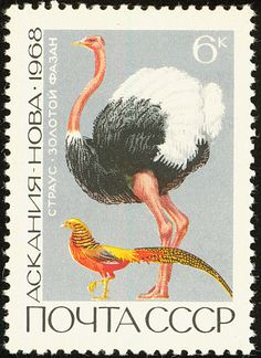 Stamps showing Golden Pheasant Chrysolophus pictus, with distribution map showing range Camelus, Golden Pheasant, Ostriches, Penny Black, Mail Art, Postage Stamps, Collage Art, Birds, Gallery