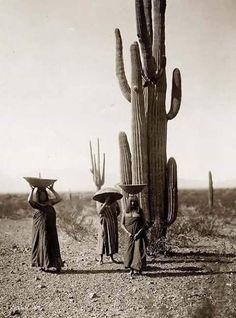 Desierto de Sonora.- 1900