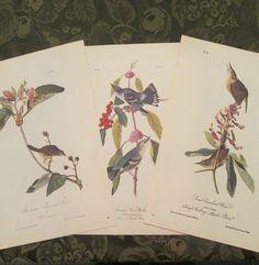 Three Vintage Bird Illustrations - Audubon Book Plates 1971