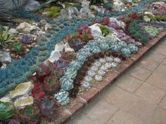 I think using succulents in the garden provide a quilt-like pattern with lots of texture - I love it!!! Garden Borders, Garden Projects, Garden Ideas, Succulent Landscaping, Succulent Gardening, Landscaping Plants, Planting Succulents, Organic Gardening, Succulent Ideas