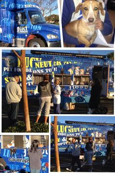 Our first mobile clinic was amazing! We thank all of you for you support in making Lucy Pet Foundation a success! #AdoptDontShop #spay #neuter #LucyPetFoundation