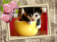 #piZap by Nicole62  cute cat