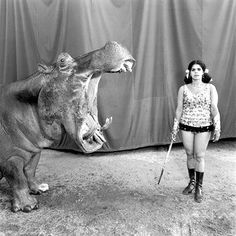 Hippo has its mouth open wider than her height and she still remains unfazed - that's the circus for yah!