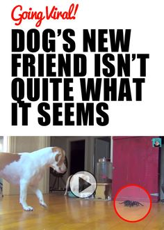 """VIRAL VIDEO: I promise you this is the best dog+spider video you'll see today :) From your friends at phoenix dog in home dog training""""k9katelynn"""" see more about Scottsdale dog training at k9katelynn.com! Pinterest with over 18,600 followers! Google plus with over 120,000 views! You tube with over 400 videos and 50,000 views!!"""