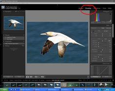 Processing RAW Files in Adobe Lightroom