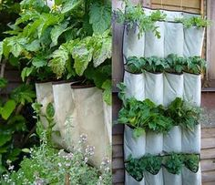 DIY Planters: shoe organizer as a vertical herb garden Jardin Vertical Diy, Vertical Garden Design, Vertical Gardens, Vertical Planter, Small Gardens, Container Gardening, Gardening Tips, Vegetable Gardening, Urban Gardening