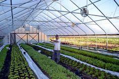 Maatilaosakkuus. Yhdysvalloissa kaupunkilainenkin voi päästä osaksi maaseudun arkea