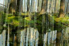 Die Abstraktion Ein Zusammenspiel von Licht, Wasser und der Natur.