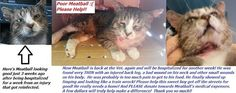 "Plainview NY: Poor ""Meatball"" the FIV+ Cat - Nobody wanted him..."