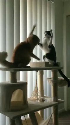 Stunt cat sticks the landing : Funny Dogs Funny Cute Cats, Cute Funny Animals, Cute Baby Animals, Animals And Pets, Funny Dog Videos, Funny Animal Memes, Funny Animal Pictures, Humor Videos, Dog Memes