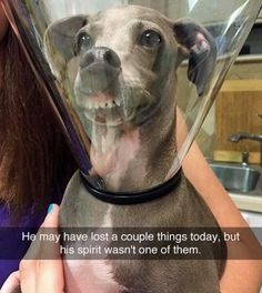 a cute picture for all you dog lovers. Funny dog memes - Funny Baby - a cute picture for all you dog lovers. Funny dog memes The post a cute picture for all you dog lovers. Funny dog memes appeared first on Gag Dad. Funny Animal Jokes, Funny Dog Memes, Funny Animal Pictures, Cute Funny Animals, Animal Memes, Cute Baby Animals, Funny Cute, Dog Pictures, Cute Dogs
