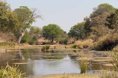 Kruger is the flagship of the South African national parks, one of Africa's best places to see a diversity of wildlife. Here are 15 things to do in northern Kruger National Park. Park Landscape, Landscape Photos, Landscape Paintings, Kruger National Park, National Parks, Wilderness Trail, Stuff To Do, Things To Do, Backpacking Trails