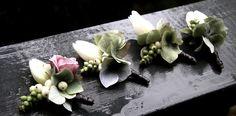 Gallery | anemone