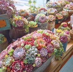 Best Succulent Garden Ideas For You Garden Succulent/Cactus lover % Now this would be an amazing birthday gift (-; PC: - LiketogirlsSucculent/Cactus lover % Now this would be an amazing birthday gift (-; Colorful Succulents, Succulents In Containers, Cacti And Succulents, Planting Succulents, Cactus Plants, Indoor Cactus, Plants Indoor, Container Flowers, Container Plants