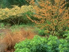 Manor Garden, Dream Garden, Witch Hazel Tree, Wooded Landscaping, Farmhouse Garden, Small Garden Design, Shade Garden, Native Plants, See Picture
