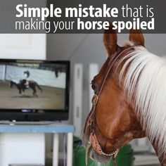 You will be surprised by the number one reason that causes horses to get spoiled