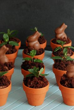 Chocolate cupcakes with Chocolate Cream cheese frosting in flower pots -  variation of Martha's idea http://www.marthastewart.com/350027/potted-chocolate-mint-puddings