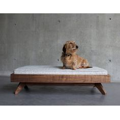 Modern Dog Beds From Pup Kit 阿猫阿狗cat Love Pinterest And