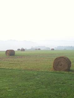 Kentucky Farm Misty Morning Hay Bales