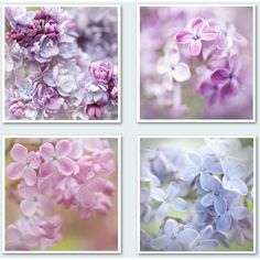 Lilac Floral Photography Set Romantic Fine Art Photo Collection,... (130 RON) ❤ liked on Polyvore featuring home, home decor, wall art, backgrounds, borders, filler, picture frame, purple home decor, blue floral wall art and purple home accessories