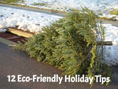 12 Eco Friendly Holiday Tips