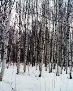 Passer Domesticus: vertical landscapes.