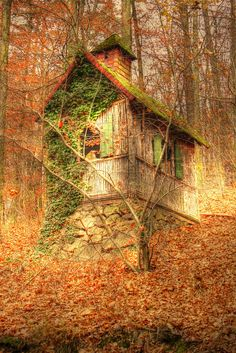 Log cabin in the woods. So spooky I'm not sure if it's out of a dream or a nightmare.