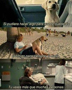 Marley and Me - Humor Culinario Love Pet, I Love Dogs, Cute Dogs, Animals And Pets, Cute Animals, Marley And Me, About Time Movie, Dog Quotes, Movie Quotes
