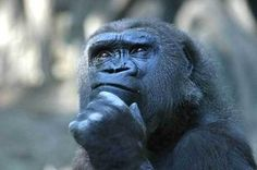 How does language affect our thinking? Do we even need a language to think? How do deaf people think if they never heard speech? Do animals think without language? I researched this to try to answer these questions. Primates, Mammals, Georg Christoph Lichtenberg, Animal Pictures, Funny Pictures, Funny Pics, Vie Simple, Funny Animals, Cute Animals