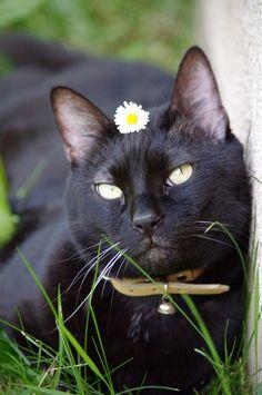 Black Cat Society