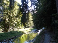 forest near Unterseen
